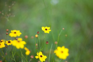 Summer of 2012 - Yellow Flowers