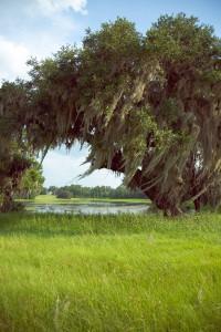 Stream-of-consciousness - meditation on trees at Fair Oaks - 2