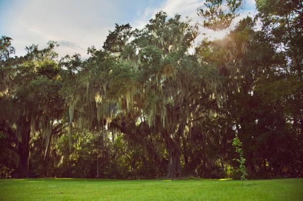 Stream-of-consciousness-meditation-on-trees-at-Fair-Oaks-3