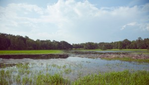 Fair Oaks Florida Ranch - Summer of 2012 - The Pond