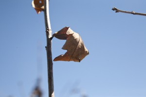 February Tree Planting at Fair Oaks - 2