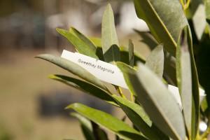 February Tree Planting at Fair Oaks - 9