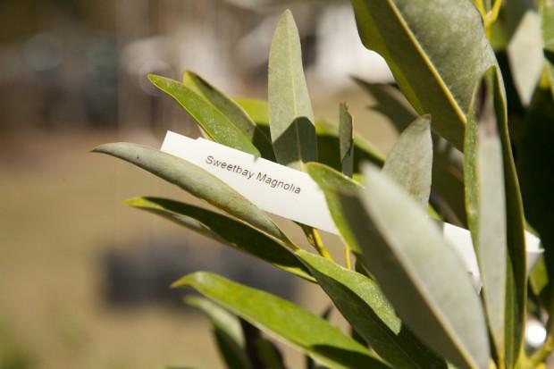 february-tree-planting-009