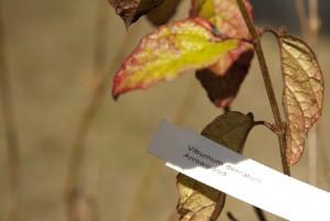 February Tree Planting at Fair Oaks - 16