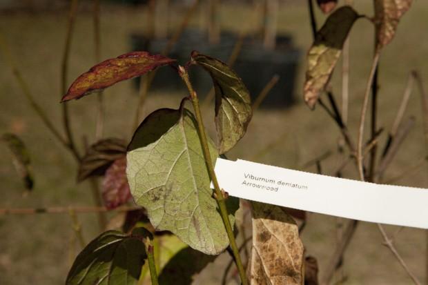 february-tree-planting-023