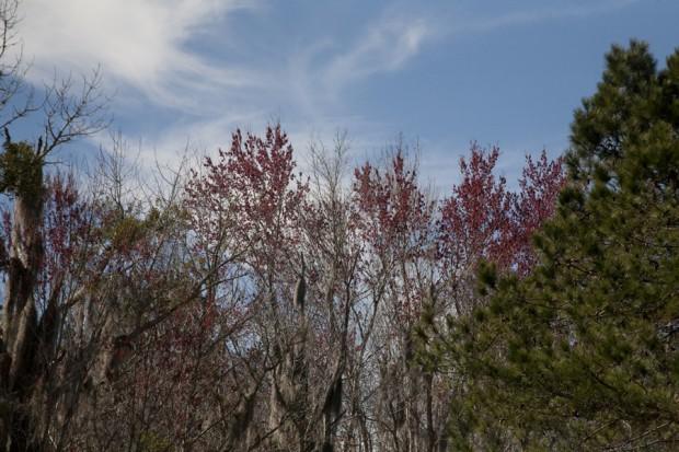 february-tree-planting-024