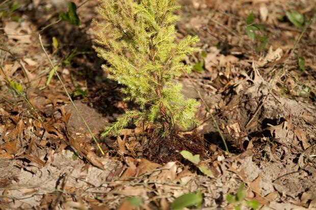 february-tree-planting-026