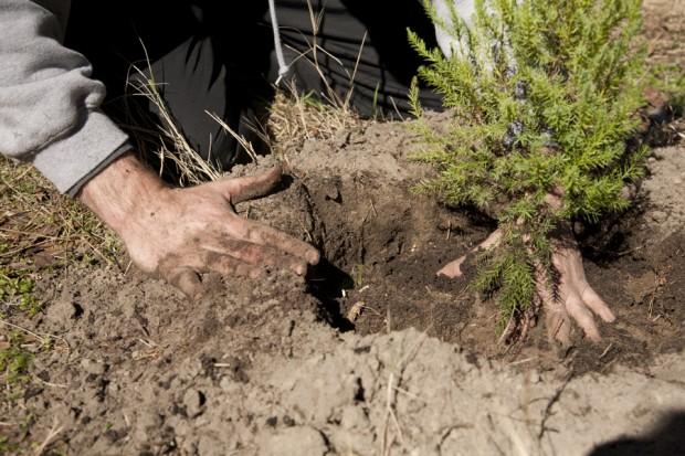 february-tree-planting-034
