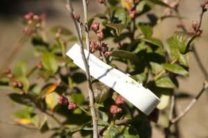 February Tree Planting at Fair Oaks - 36