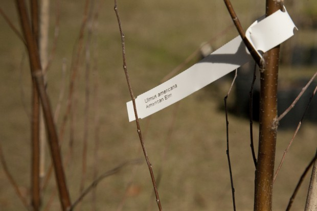 february-tree-planting-049