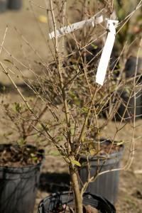 February Tree Planting at Fair Oaks - 55