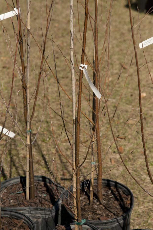 february-tree-planting-056