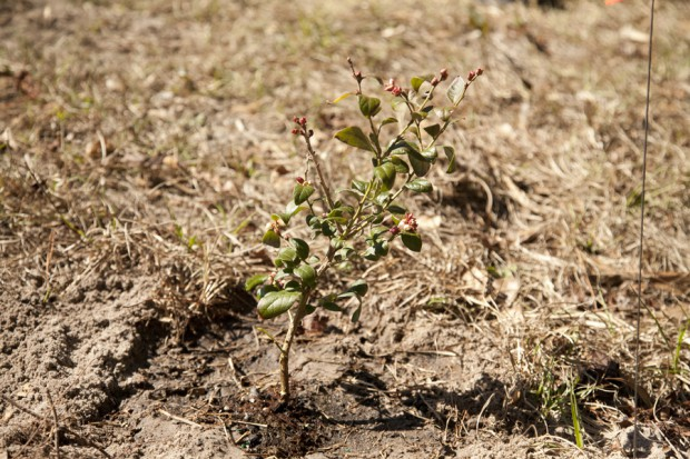 february-tree-planting-057