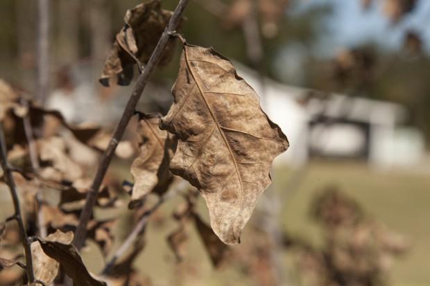 february-tree-planting-063