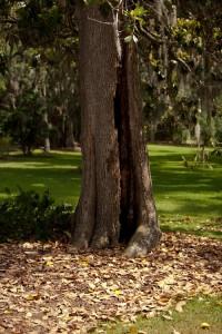 Fair Oaks   Magnolia (2)