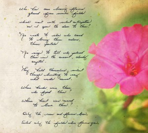 Where the colorful flower - Poem