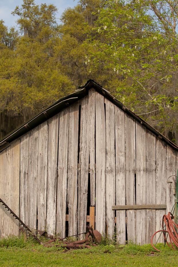 Fair Oaks + Oak Hammocks adventures in Evinston – 05