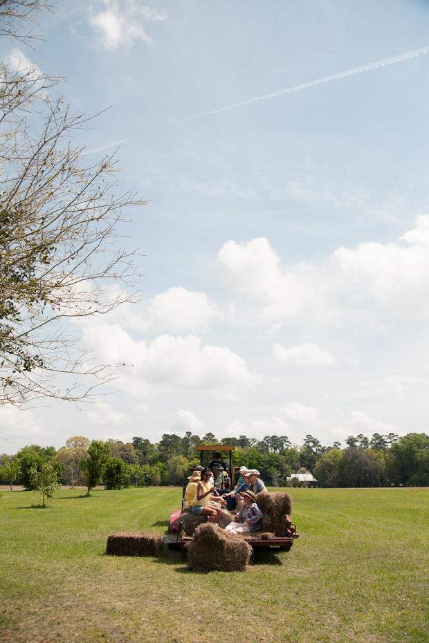 Fair Oaks + Oak Hammocks adventures in Evinston – 18