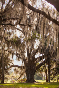 Fair Oaks Florida